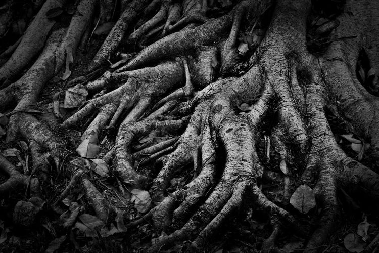 Root Backgrounds Tree Trunk Full Frame No People Nature Day Tree Outdoors Close-up