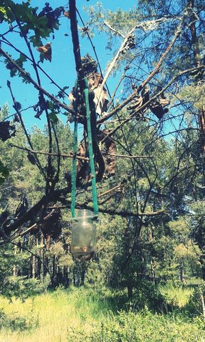 Trap For Spiders Trees Forest Sukholuch'ye Ukraine