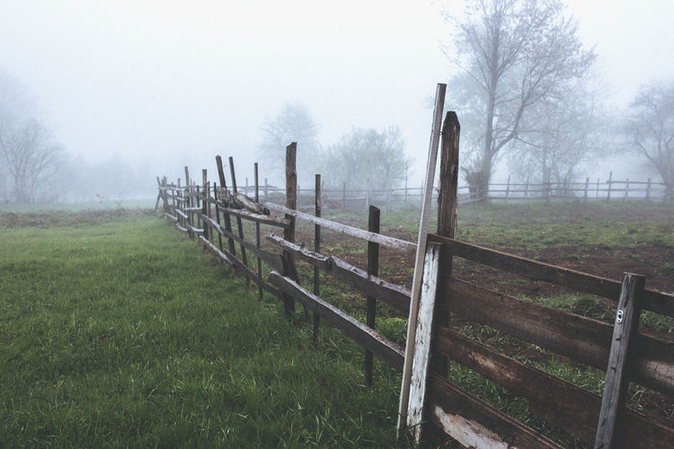 Bare Tree Beauty In Nature Day Fence Fog Grass Nature No People Outdoors Sky Tree