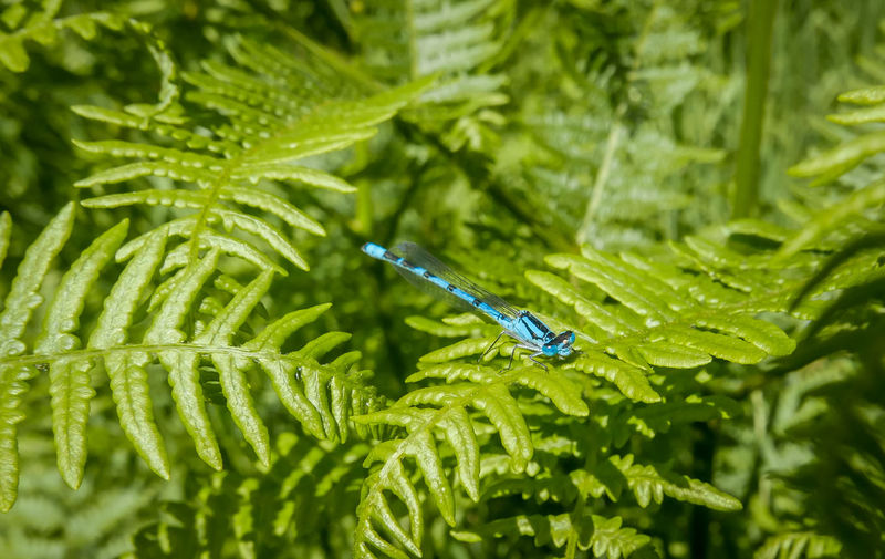 Close-up of grasshopper on leaf