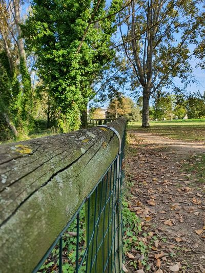Footpath by trees in park