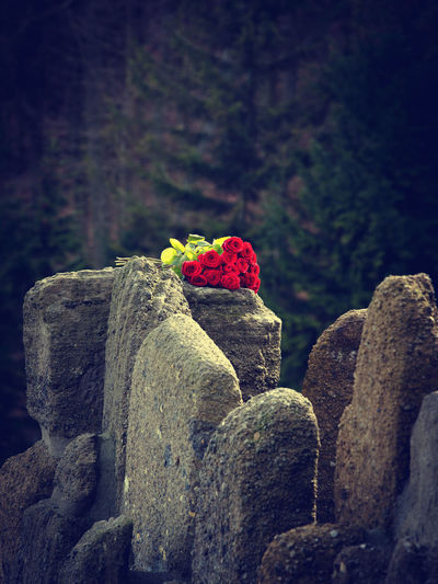 Rock Solid No People Plant Nature Focus On Foreground Rock - Object Day Close-up Beauty In Nature Outdoors Selective Focus Red Stone Tree Flowering Plant Flower Stone - Object Stack Tranquility Roses Bunch Of Flowers Bunch Of Roses Love Abandoned