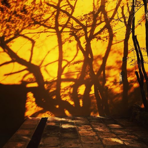 Mexico Travel Photography Sunlight Shadow Tree Autumn Nature Sunset Silhouette No People Outdoors Branch Beauty In Nature