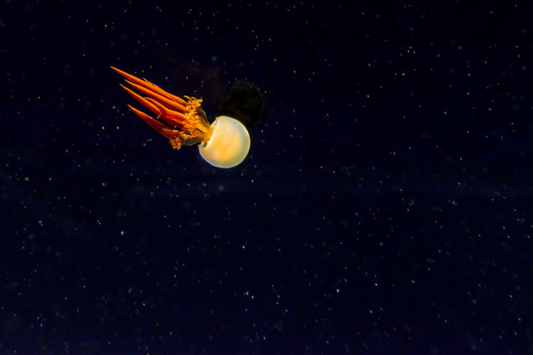 Jellyfish against sky at night