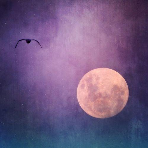 Luna Lullaby ?