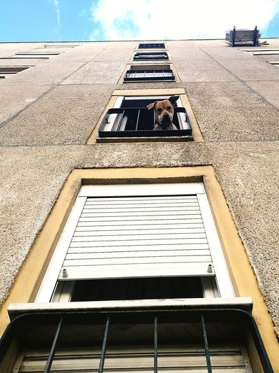 Dog Dog Face Dog Expression Dog Photography Dog Life Domestic Animals Domestic Life Domestic Dog Looking Down Looking Down From A Building Roof Looking Down From Above City Sky Architecture Building Exterior Built Structure Creative Space The Architect - 2018 EyeEm Awards The Street Photographer - 2018 EyeEm Awards EyeEmNewHere The Creative - 2018 EyeEm Awards