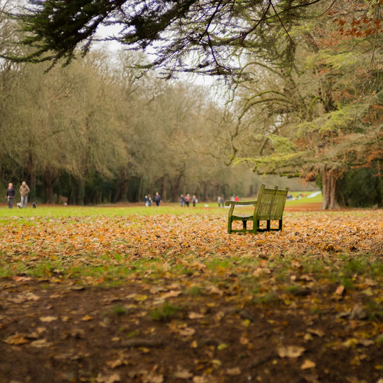 Bench Amidst Fallen Autumn Leaves At Park