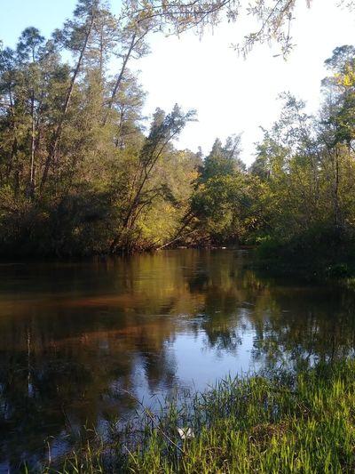 My backyard. Tree Water Lake Reflection Sky Calm
