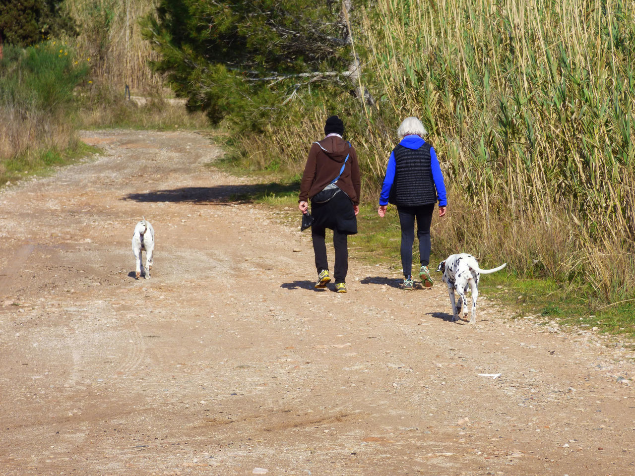 dog, pets, walking, domestic animals, rear view, one animal, mammal, real people, full length, nature, dog lead, day, outdoors, lifestyles, men, friendship, two people, bonding, women, grass, tree, adult, people