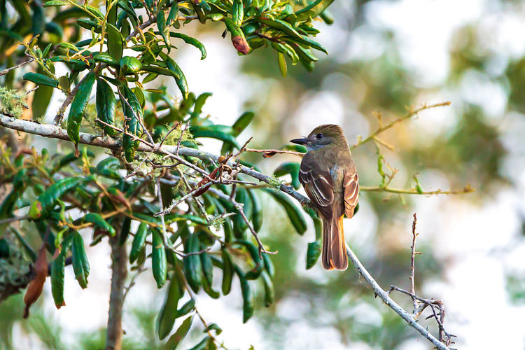 Vertebrate Bird Animals In The Wild Animal Wildlife Animal Themes One Animal Animal Tree Plant Perching Branch Focus On Foreground Low Angle View Leaf Plant Part No People Day Green Color Nature Growth Outdoors