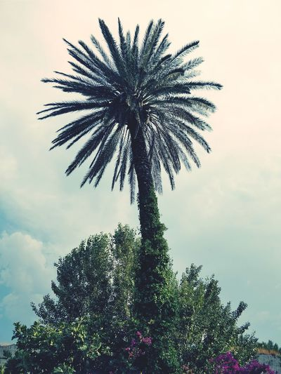 Tree Low Angle View Palm Tree Sky Outdoors No People Growth Day Flower Nature