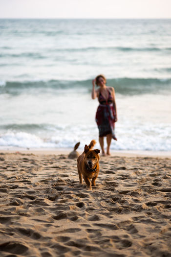 Dog with woman in background on beach