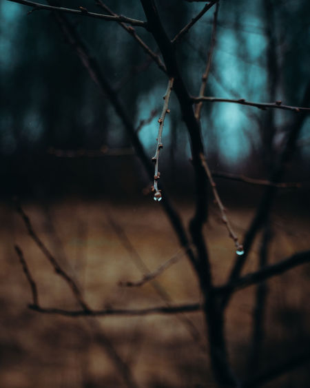 Close-up of wet twigs