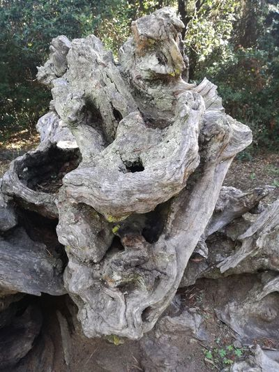 Tree Trunk Nature Beauty In Nature Face Face In Nature Visage Tronc Botany Sourire