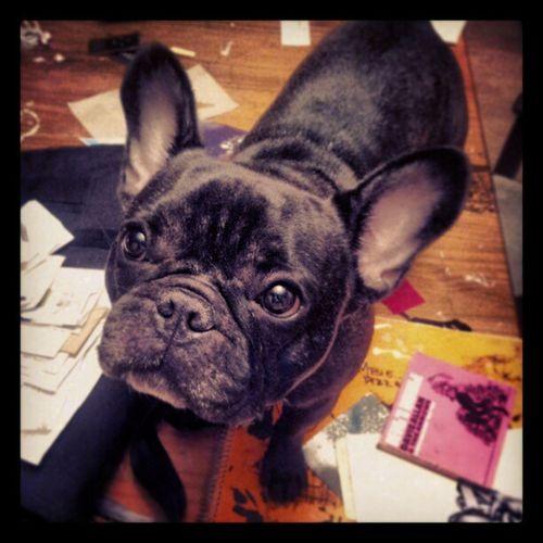 Frankie Dogsittin Stitch Lilmonster