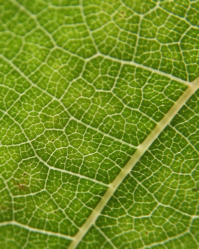 Blattstruktur Blatt Blattdesign, Leaves Leavesporn Leaves_collection Adern Macro Nature Macro_flower Macroporn Macro_perfection Natureart Nature Photography Nature_perfection