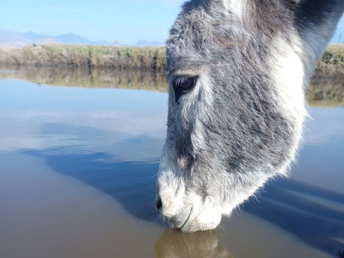 Close-up of a horse in water