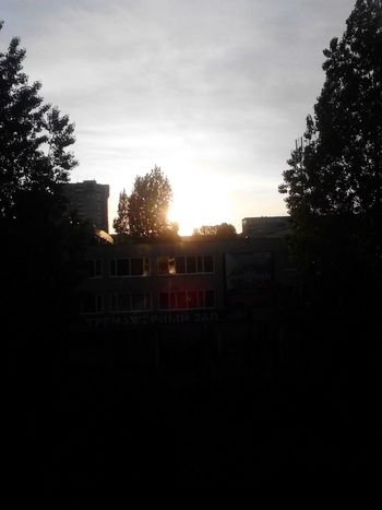 Sun Trees Good Morning Daybreak