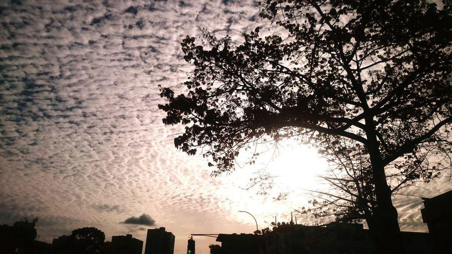 Caracas... City Tree Pixelated Sunset Silhouette Skyscraper Sky Architecture Building Exterior Built Structure
