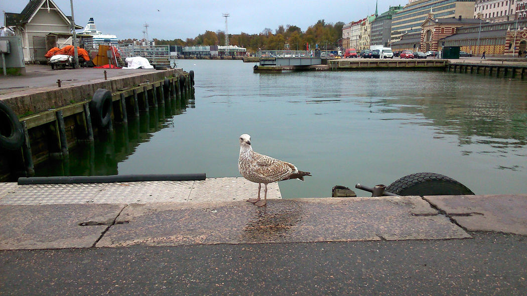 Helsinki Kauppatori Seagull Sea Port Cloudy Walking Around The City