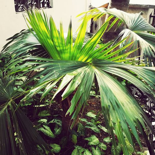 Gulangyuisland Plant Green Color Growth Nature Leaf 厦门 日光岩 植物 植物園