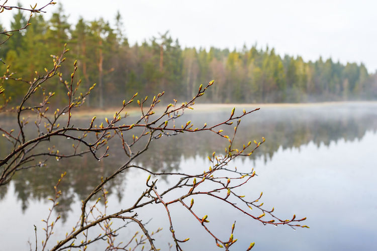 View of plants against lake