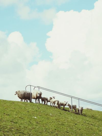 Cloud - Sky Sky Outdoors Grass Animal Themes Domestic Animals Nature No People Togetherness EyeEm Taking Photos Myhometown Leer (Ostfriesland)