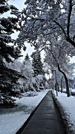 Bozeman Montana OneYearAgo Winter Snow