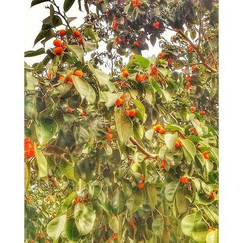 это уже ягодки осень мойгород фотоохота прогулкасхорошимчеловеком природа ягодки настроение утро флораифауна morning photooftheday myisrael instaisrael instaphoto instagram_israel insta_israel ig_street street world_beststreet plants autumn rishonlezion nature