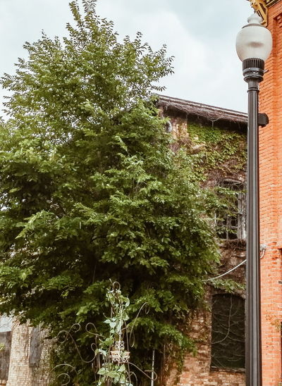 Tree Low Angle View No People Day Outdoors Built Structure Sky Architecture Building Exterior Nature Vines On Wall Vines On Building Lamp Post