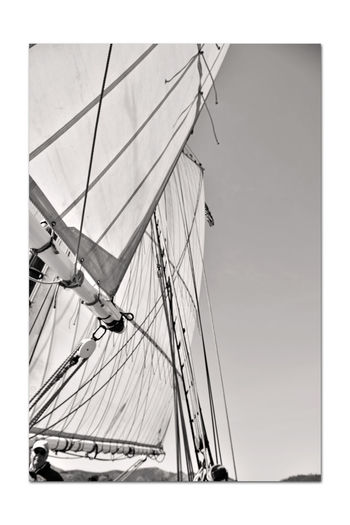 Sailing Aboard The Alma 6 San Francisco CA🇺🇸 The Alma 80 Ft. Scow Schooner Built 1891 Wooden-hulled Flat-bottomed Sailing San Francisco Bay Alma's Rigging & Sails Monochrome_Photography Monochrome Sepia Black & White Black & White Photography Black And White Black And White Collection  Open Sails Bnw_friday_eyeemchallenge Nautical Vessel Mast
