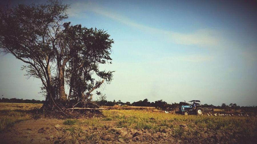 ต้นไม้และรถไถ