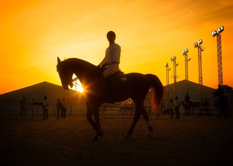Jockey On Horse Against Sky During Sunset