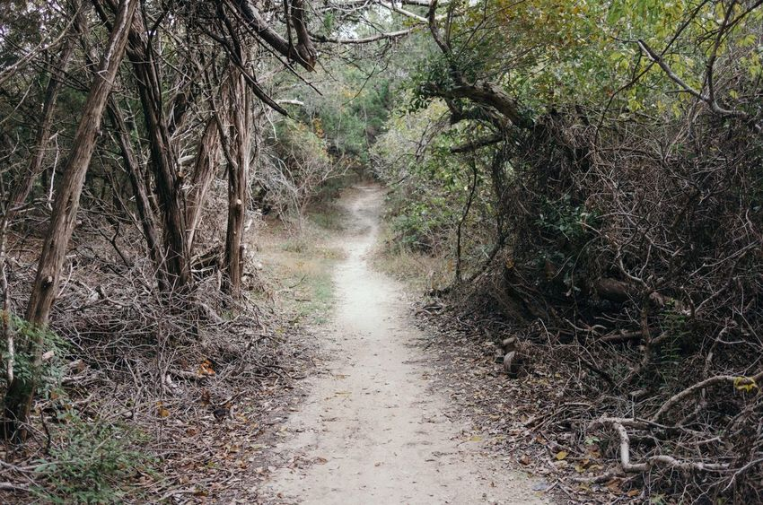 Nature The Way Forward Tree Forest Landscape Outdoors Path Windy Winding Hike Pathway Cedar Waco Cameron Park Escape Dirt Less Traveled Wander Isolation Ramble Brush Confused Trek Explore Get Outside