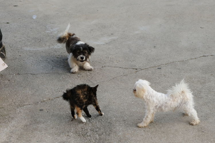 Dog and Cat Duel 2 Dog Cat Animal Themes No People Day Animal Outdoors Pets Pet Portraits The Troublemakers