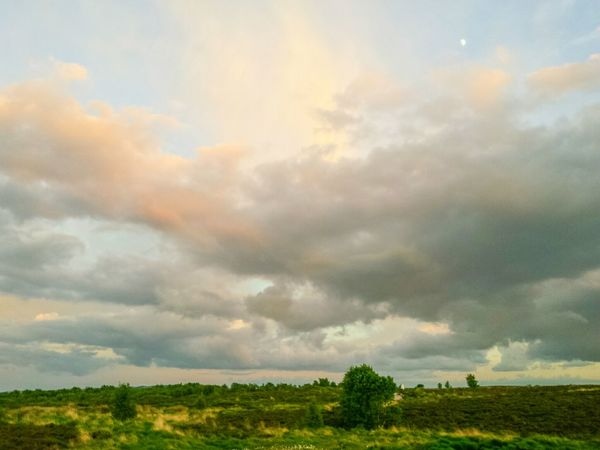 Dramatic Sky Tree Cloud - Sky Nature Field Beauty In Nature Cloudscape Storm Cloud Outdoors Day Landscape No People Scenics Tranquil Scene Sunset Rural Scene Multi Colored Sunlight Grass Yorkshire Landscapes The Great Outdoors - 2017 EyeEm Awards Out Of The Box Norland Moor Travel Destinations