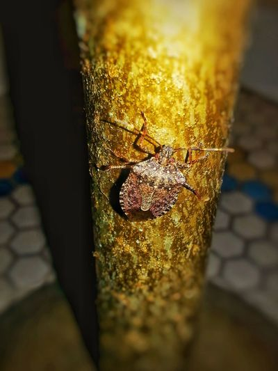 Animal Themes Outdoors Insect Close-up Day Portland Oregon Usa Beetlebug Portland, OR Gold Color