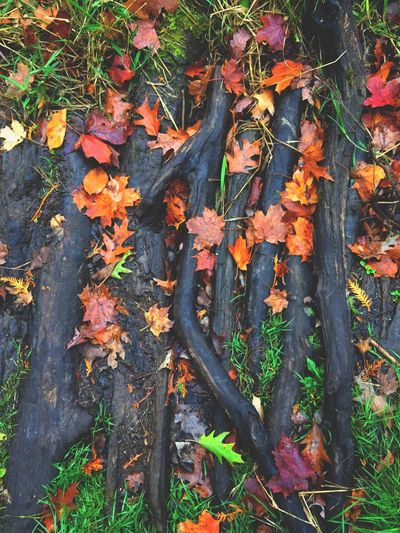 Hike Adventure Path Follow Winter Fall Orange Faded Fade Trees Bark Tree Colour Forest Leaf Outdoors No People Nature Day Autumn Plant Growth Beauty In Nature Close-up Freshness EyeEmNewHere