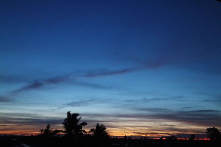 Sky Scenics Cloud - Sky Silhouette Beauty In Nature Tree Sunset Nature Dramatic Sky Tranquil Scene Tranquility Blue No People Dusk Outdoors Palm Tree Landscape Day