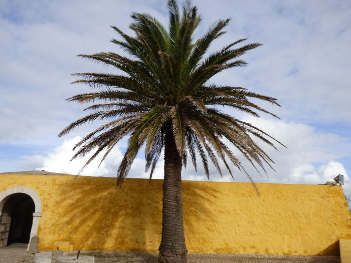 Date palm tree by yellow wall against sky