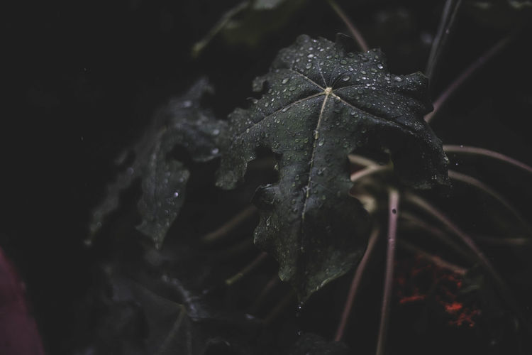 Close-up of wet plant at night