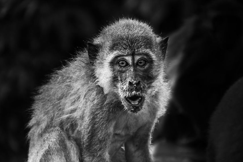 Animal Portrait Animal Wildlife Animals In The Wild Monkey Animal Themes One Animal Outdoors Ape Mammal No People Primate Nature Close-up Day White Color songkhla Face