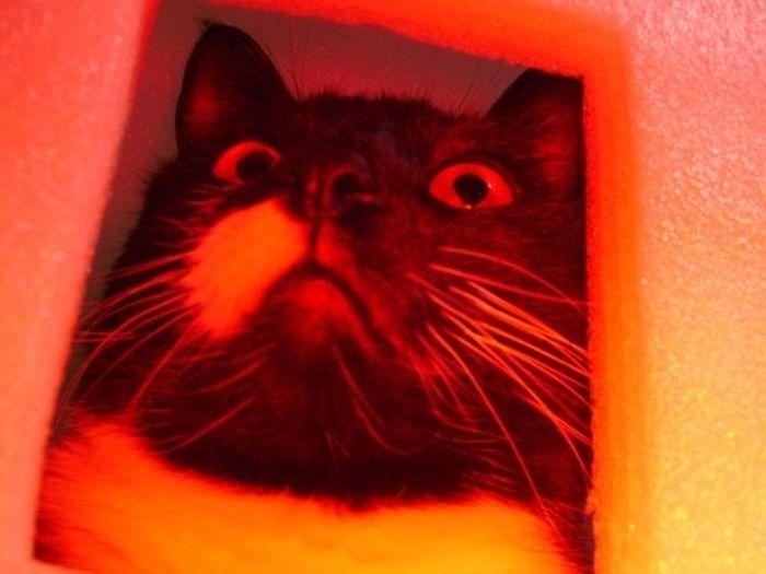 Neko Furmagoo Cat To the Fur Fort! No Filter