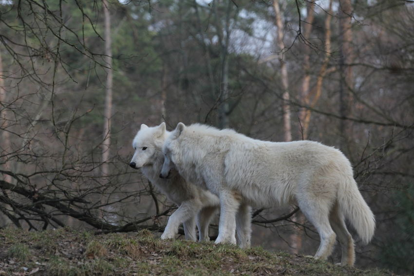 Animal Photography Dangerous Forest Park Wild Wildpark Alte Fasanerie