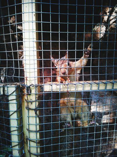 Caged AnimalCruelty Getmeoutofhere Squirrel Closeup Sad & Lonely Sad Face Ironbars Freedom! Smellthefreshair Eye4photography  EyeEmBestPics EyeEm Best Shots EyeEm Best Edits EyeEm Nature Lover Squirrels Squirrel Photo Squirellsrcute Squirrel Friend  Squirrel Life Squirellove