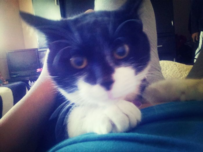 I Love You ❤ Sr. Gato Me Encanta Sus Ojos