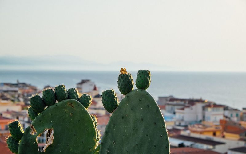 Close-Up Of Succulent Plant In City Against Sea And Sky