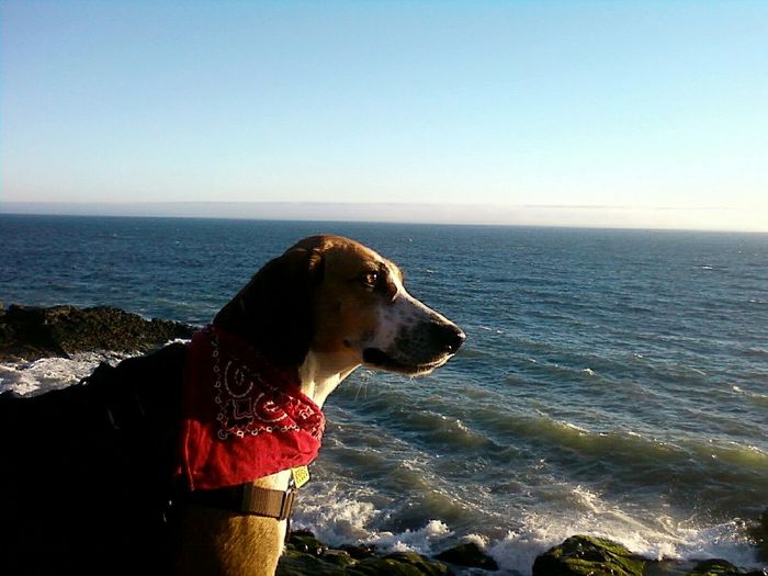 Side View Of Dog Looking At Calm Sea