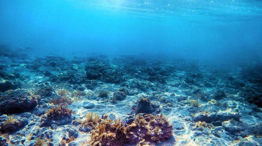 Underwater at umm al quwain Underwater Water Sea Nature