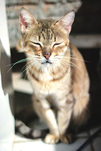Plant Animal Themes Cat Close-up Day Domestic Animals Domestic Cat Feline Mammal No People One Animal Outdoors Pets Sitting Sunbathing Whisker